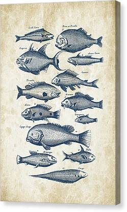 Saltwater Fishing Canvas Print - Fish Species Historiae Naturalis 08 - 1657 - 34 by Aged Pixel