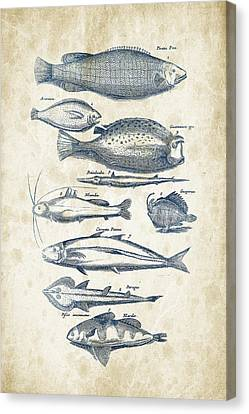 Saltwater Fishing Canvas Print - Fish Species Historiae Naturalis 08 - 1657 - 36 by Aged Pixel
