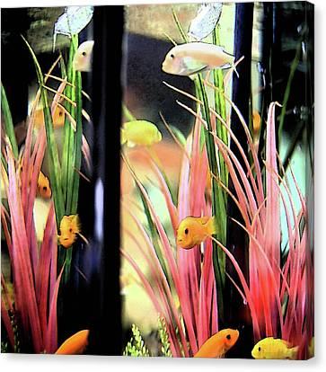 Canvas Print featuring the digital art Fish Tank Pastel by Ellen Barron O'Reilly