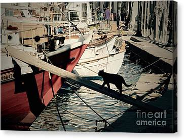 Fisherman's Cat  Canvas Print by Louise Fahy