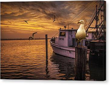 Flying Gull Canvas Print - Fishing Boat And Gulls At Sunrise by Randall Nyhof