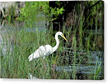 Fishing In St. Andrew State Park Canvas Print by Tamra Lockard