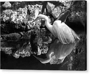 Fishing In The Creek In Black And White Canvas Print by Judy Wanamaker