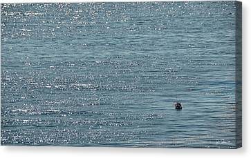 Canvas Print featuring the photograph Fishing In The Ocean Off Palos Verdes by Joe Bonita