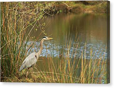 Canvas Print featuring the photograph Fishing Oceano Lagoon by Art Block Collections