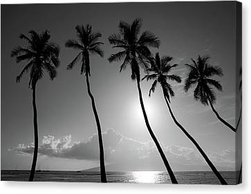 Five Coconut Palms Canvas Print by Pierre Leclerc Photography