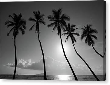 Five Coconut Palms Canvas Print by Pierre Leclerc Photography