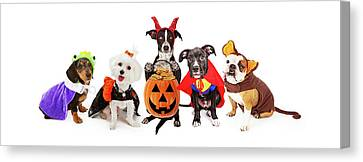 White Maltese Canvas Print - Five Dogs Wearing Halloween Costumes Banner by Susan Schmitz