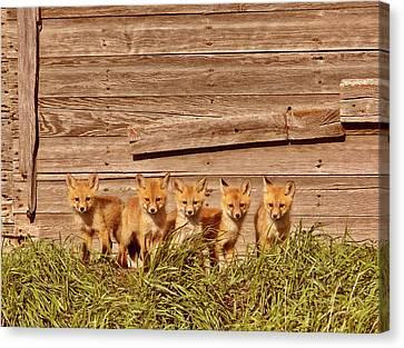 Five Fox Kits By Old Saskatchewan Granary Canvas Print by Mark Duffy