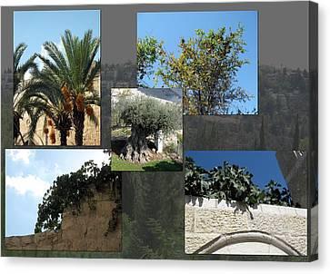 Five Fruit Of Israel Canvas Print by Menucha Citron