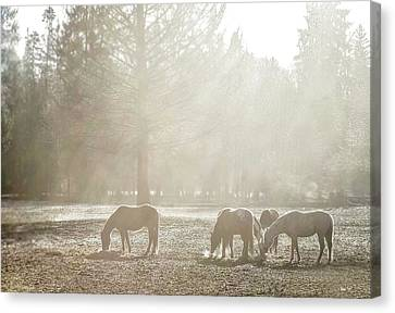 Five Horses In The Mist Canvas Print