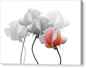 Five Roses Canvas Print