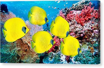 Clown Fish Canvas Print - Five Yellow Reef Fish by Garland Johnson