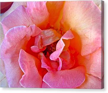 Flallon Up Close Canvas Print by Gwyn Newcombe