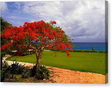 Flamboyant Tree In Grand Cayman Canvas Print