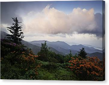 Flame And Flowers Canvas Print by Rob Travis