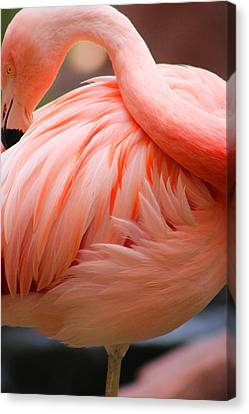Flame Colored Canvas Print