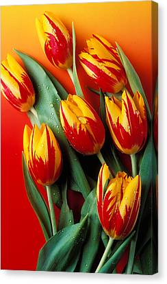 Flame Tulips Canvas Print by Garry Gay