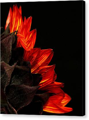 Canvas Print featuring the photograph Flames by Judy Vincent