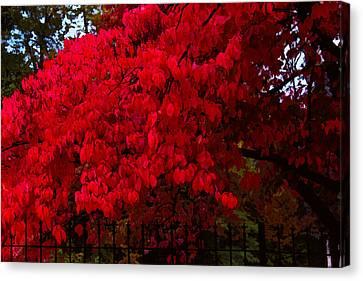 Flames Of Autumn Canvas Print