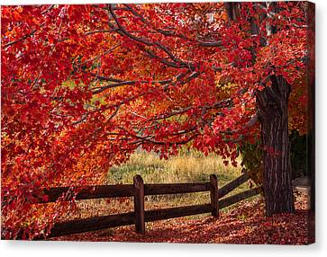 Flames On The Fence Canvas Print by Darren  White