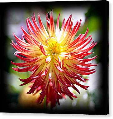 Canvas Print featuring the photograph Flaming Beauty by AJ Schibig
