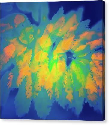 Canvas Print featuring the photograph Flaming Foliage 2 by Ari Salmela