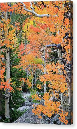 Canvas Print featuring the photograph Flaming Forest by David Chandler