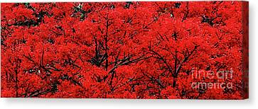 Canvas Print featuring the photograph Flaming Red Panorama II By Kaye Menner by Kaye Menner