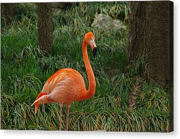 Canvas Print featuring the photograph Flamingo 1 by Robyn Stacey