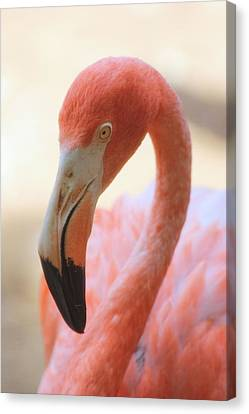 Canvas Print featuring the photograph Flamingo 2 by Elizabeth Budd