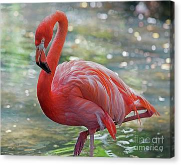 Flamingo 2  Canvas Print