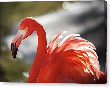 Canvas Print featuring the photograph Flamingo 2 by Marie Leslie