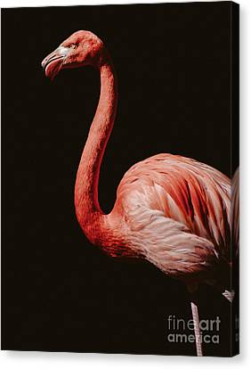 Canvas Print featuring the photograph Flamingo 7 by Andrea Anderegg