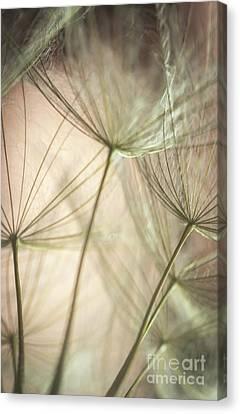 Flamingo Dandelions Canvas Print by Iris Greenwell