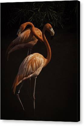 Flamingo Delight Canvas Print