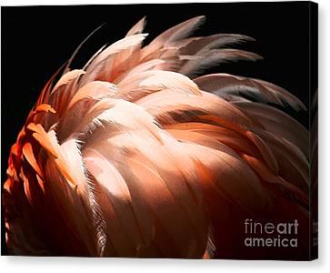 Flamingo Feathers Canvas Print by Sabrina L Ryan