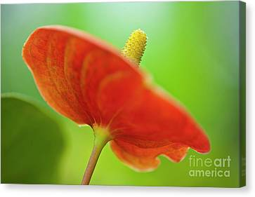 Flamingo Flower 2 Canvas Print by Heiko Koehrer-Wagner