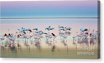 Flamingo Panorama Canvas Print by Inge Johnsson