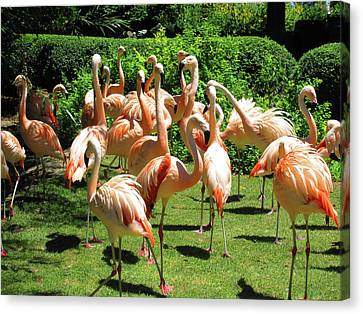 Canvas Print featuring the photograph Flamingo Party by Tammy Sutherland