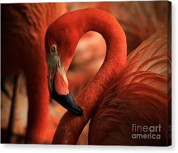 Flamingo Poised Canvas Print by Toma Caul
