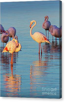 Flamingo Reflections Canvas Print by Inge Johnsson