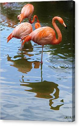 Canvas Print featuring the photograph Flamingo Reflections by Margaret Bobb