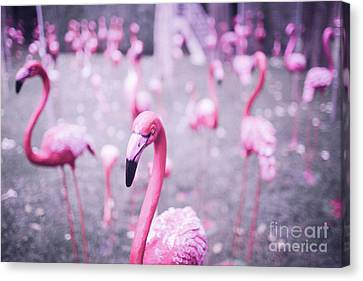 Canvas Print featuring the photograph Flamingo by Setsiri Silapasuwanchai