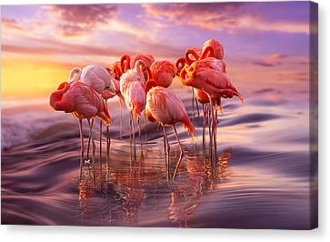 Flamingo Siesta Canvas Print