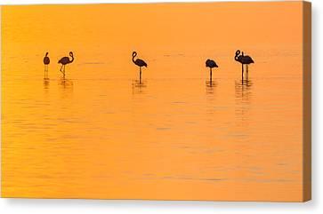 Flamingo Sunset - Silhouette Photograph Canvas Print by Duane Miller