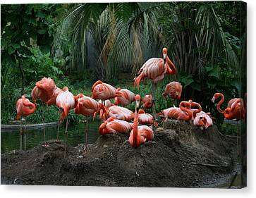 Canvas Print featuring the photograph Flamingos by Cathy Harper