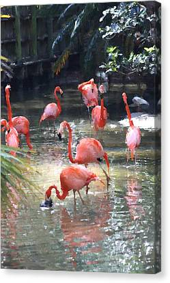 Flamingos Canvas Print by Diane Merkle