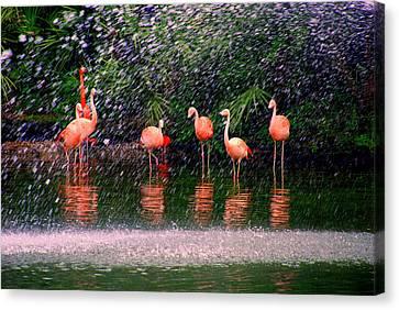Flamingos II Canvas Print by Susanne Van Hulst
