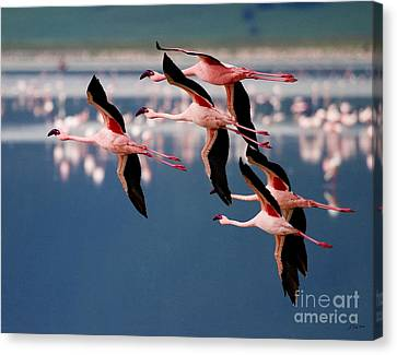 Flamingos In Flight-signed Canvas Print